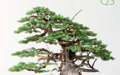 Creative capacity & bonsai spirit